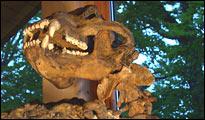 Skelett im Museum der Tiefenhöhle