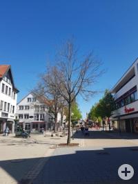 Winterlinde Marktplatz