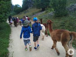Wanderung mit Alpakas